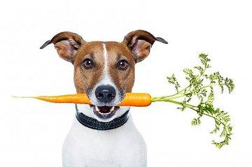 Vegetarisch en vegan voer