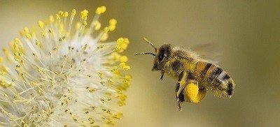 Help-de-bijen!